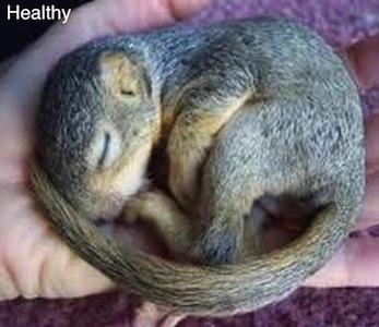 Baby Squirrel Care Is Your Baby Healthy